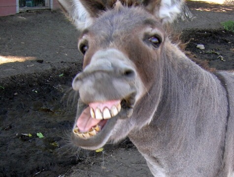 The Donkey and the Taoist | Dennis Lewis